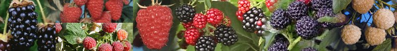 The North American Raspberry and Blackberry Association